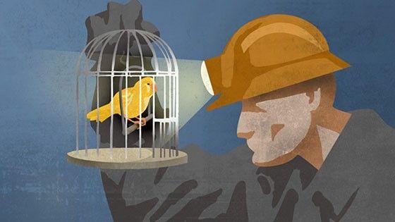 Fågel i gruva