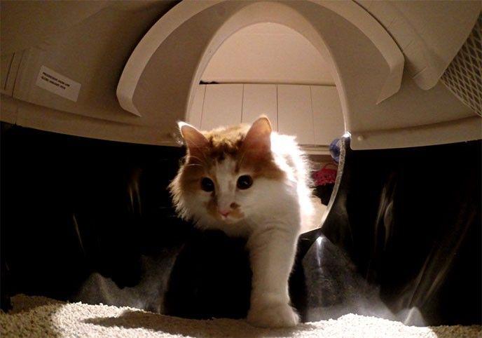 Automatisk kattlåda