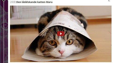 Kolla världens första kattvideo