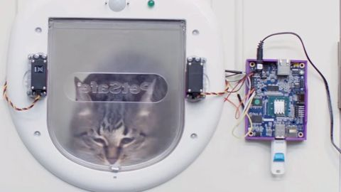 Katt, kattlucka, AI