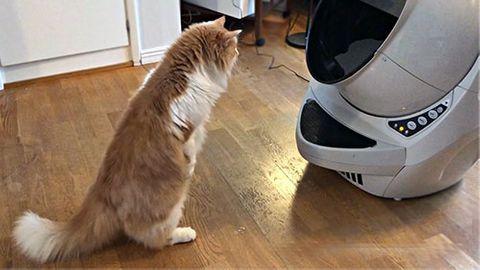 Litter-robot kattlåda
