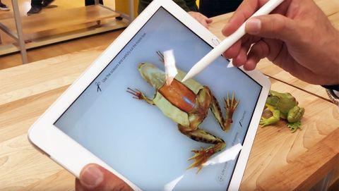 AR Kit Froggipedia