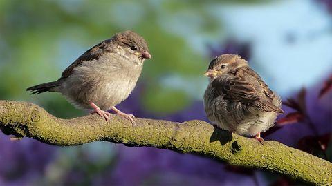 Fågelappen