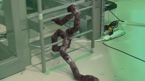 Ormrobot