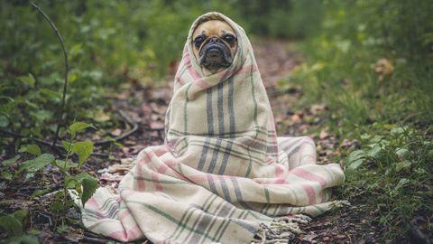 Dejtingapp hundar