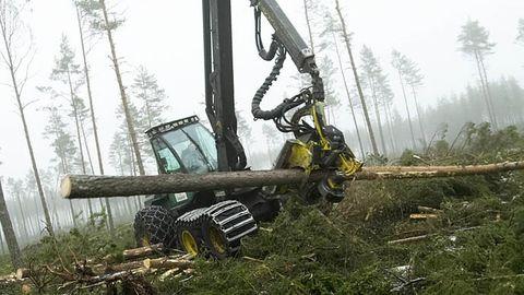 Skogsbruk