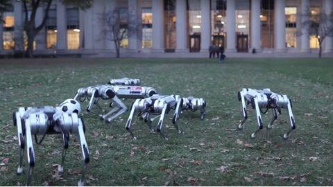 Robot-geparder