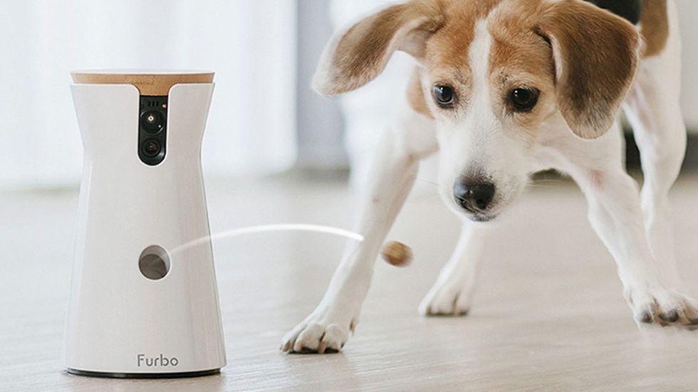 Pet tech: Här är coolaste prylarna till ditt husdjur