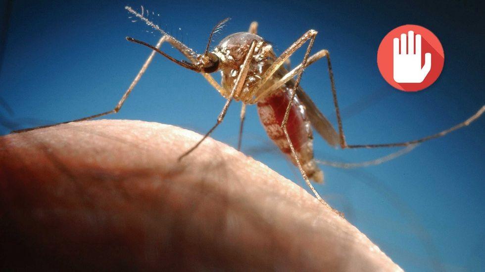 myggdödare och myggfångare