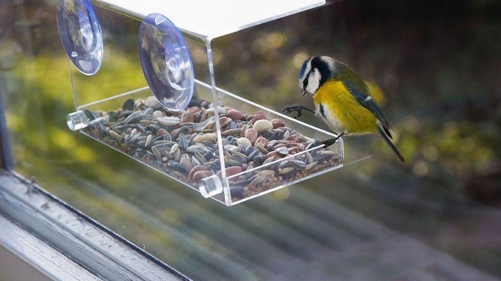fågelmatare