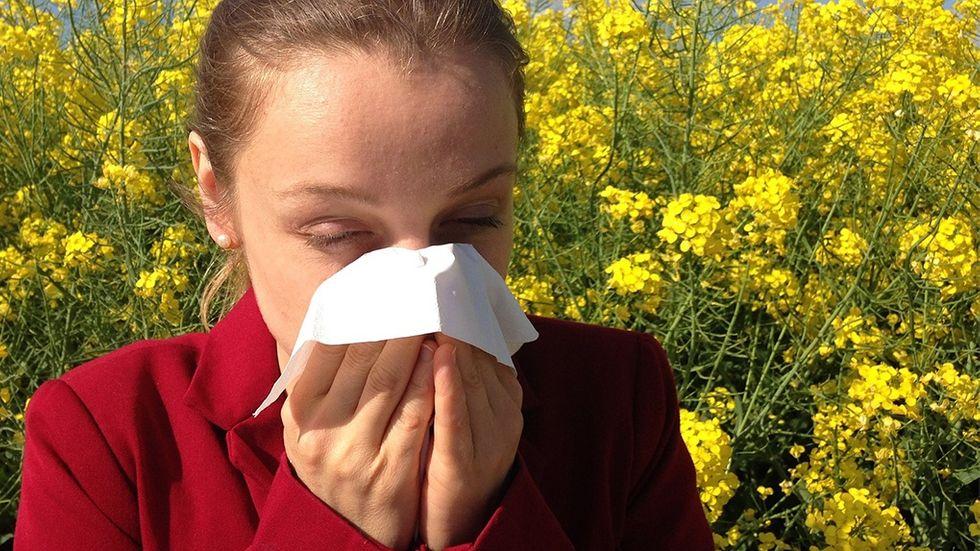 Stoppa pollen allergi